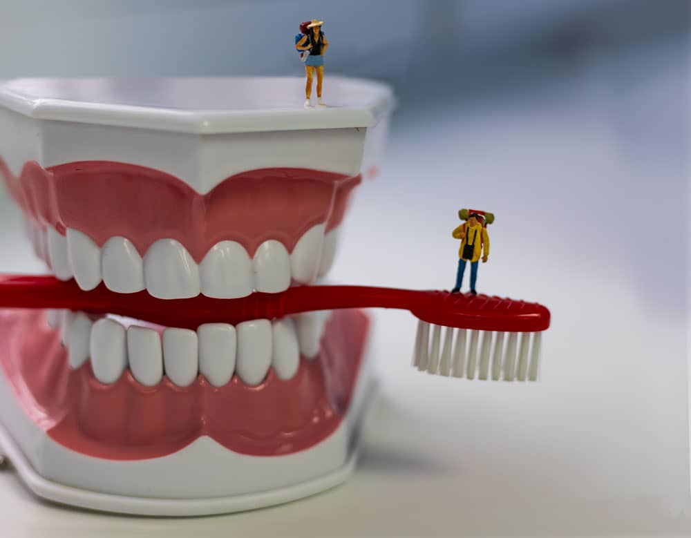 dental mouth teeth model